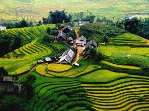برنجزارهای ویتنام برای سفر توریستی