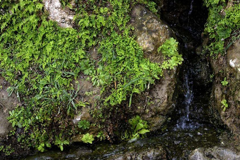 آبشار لادیز میرجاوه